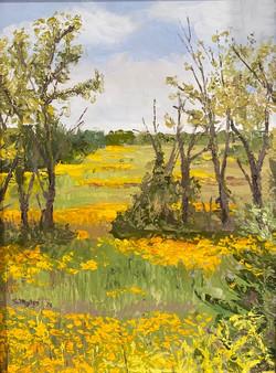 Myles, Steve-Wildflower Meadow