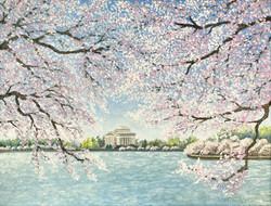 Hindle, Stuart Allison-Cherry Blossoms A