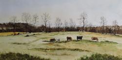 Mulvena, Danny-22 Cows