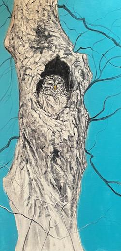 Didoha Judy RC Owl #1 Acrylic