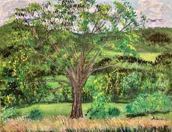 Scala, Amy-Learning Tree Farm