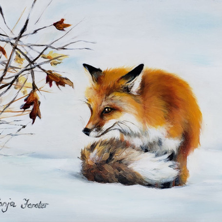 Sonja Forster, Feeling the Cold