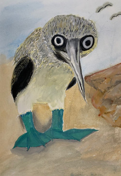 Gradison, Blue-Footed Booby