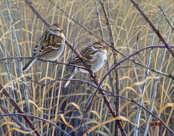 Walsh, William-Tree Sparrows
