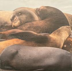 Holdridge, Sherri-Sea Lion Dreams
