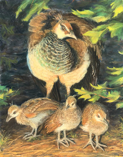 Goll, Lori-Peahen and Chicks