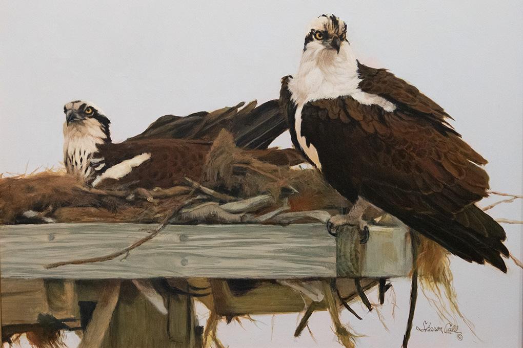 Call, Sharon- Osprey Nesting Acrylic_