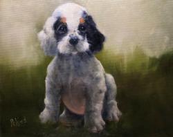 Weed, Peggy-Bird Dog Puppy