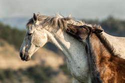 Miller, Pamela-Wild Mare and Foal