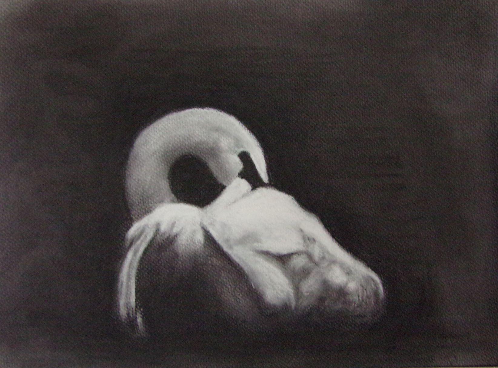Turner, Kasha-Preening Swan