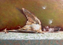 Liberace Lina Cuckoo with Milkweed oil