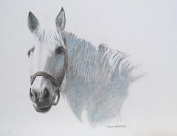 Kramer, DIck-White Horse - Copy