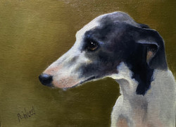 Weed, Peggy-The Whippet