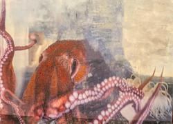 Holdridge, Sherr-Octopus Garden