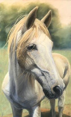 Goll, Lori-White Stallion