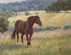 Walsh, William-Dark Horse