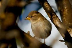 Schneider, Paul-Chick Through the Branch