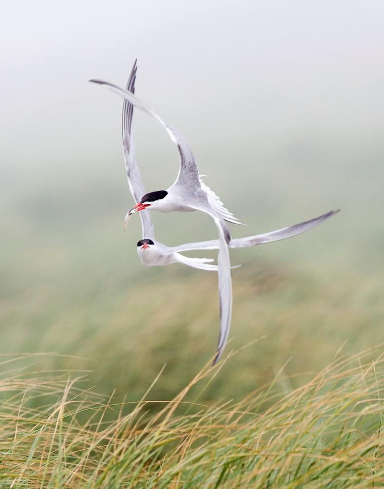 Nevitt, Jack-Bird Ballet