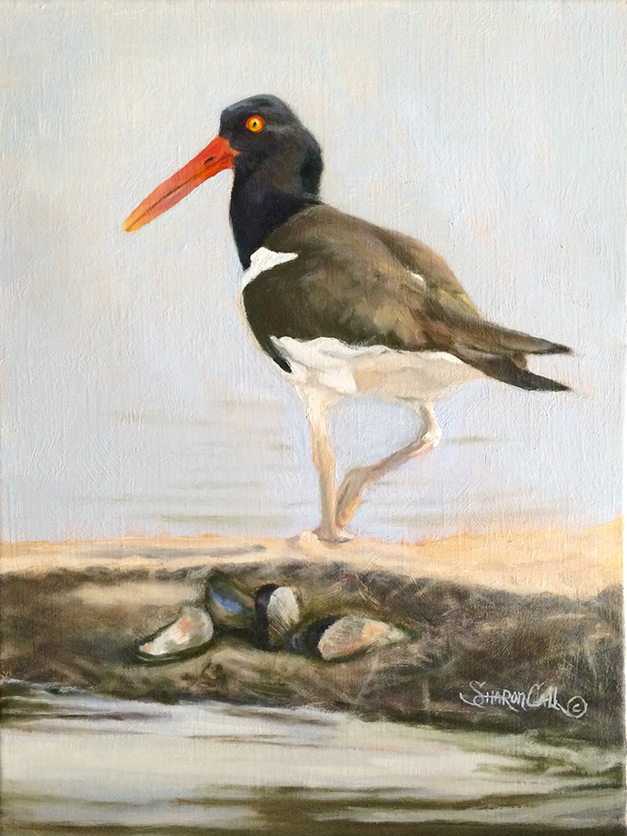 Call Sharon The Oystercatcher Oil