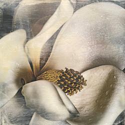 Holdridge, Sherri-Magnolia in the Rain