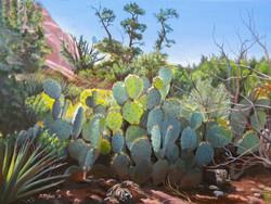 Myles, Steve-Sunlit Cactus at Sedona Vor