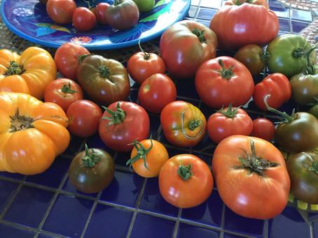 Last week for Heirloom tomato starts ($5/each)