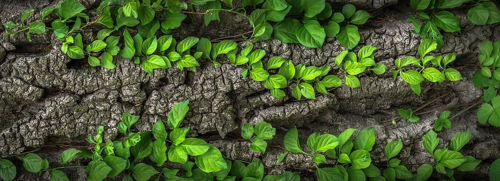 Fond nature, pierres et feuilles