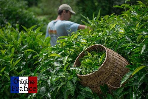 Thé vert bio de la Réunion