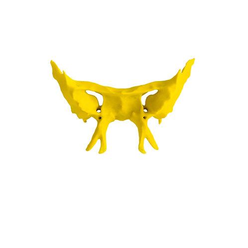 Kość klinowa (model anatomiczny)