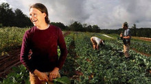 Forget Golf Courses: Subdivisions Draw Residents With Farms