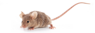 mouse_banner_for_shah.png