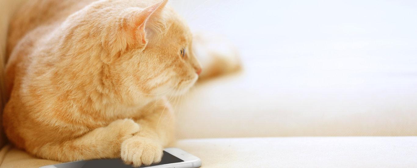 McGehee clinic cat using the phone