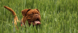 McGehee Clinic Bulldog
