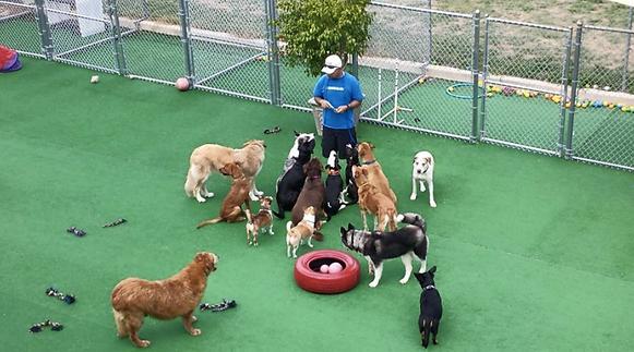Playcare Frank ortiz dog human aggression food protective