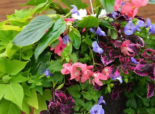 hanging baskets.jpg