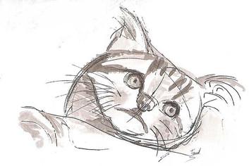 Crobar à l'encre de chine Tête de chat