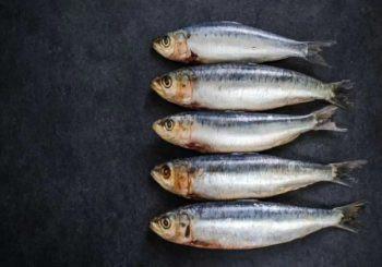 Landmark-Study-Shows-Sardines-Help-Keep-