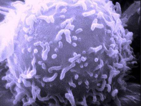 Qui cherche... trouve. Chapitre 3 : l'immunologie de la reproduction, une solution rendue invisible.