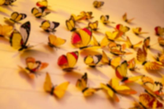 Marion Krause Schmetterlinge Schilddrüse