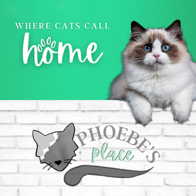 Static/Print Ad for Phoebe's Place