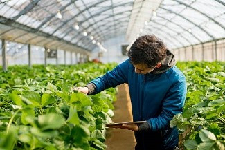 Innovation with a Purpose: Strengthening Food Systems through Technology