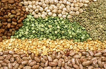 Lentils - CSIRO-Science Iamge 3324.jpg