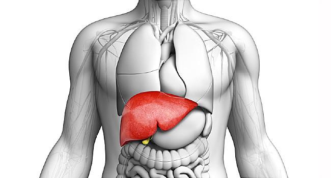 Let's talk liver