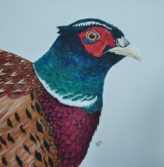 Startled Pheasant