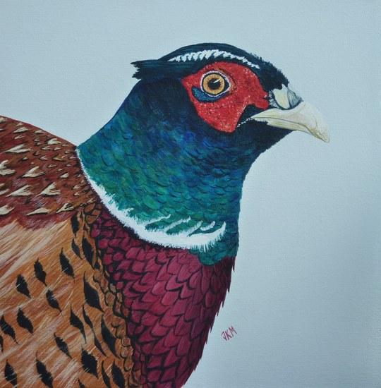 Startled Pheasant