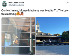 Polo Green Stable broodmare