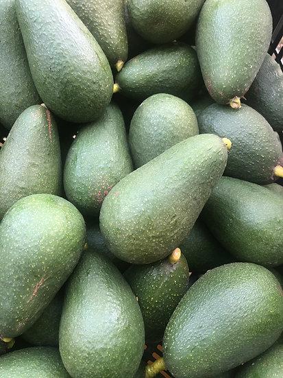 Jan Boyce Avocados