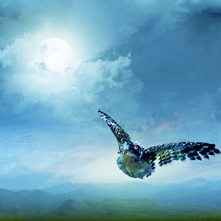 Wisdom Feathers Blog