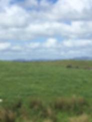 cowhill.jpg