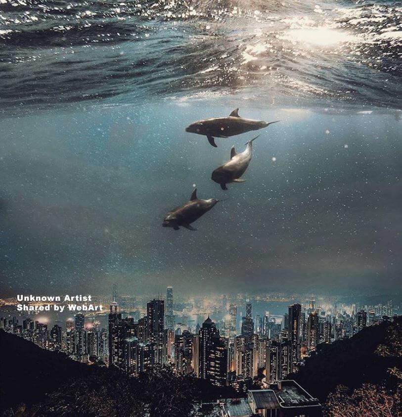 Delfini sulla Città